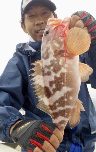 アコウ 真鯛